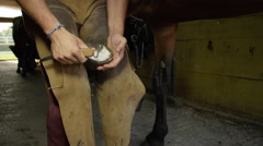CLOSE UP: Experienced farrier cleaning off and trimming sole of horse hoof Stock Footage