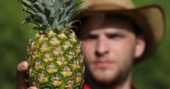 Farmer Man Showing Attractive Pineapple in Tropical Sweet Ananas Presentation Stock Footage