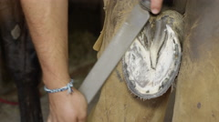 CLOSE UP: Blacksmith farrier smoothing out unleveled areas of horse's hoof Stock Footage