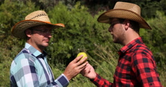 European Peasant Farmer Men Talking Bio Golden Apple Agriculture Collaboration Stock Footage