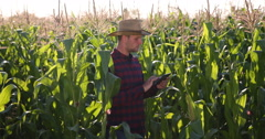 Young Agriculturist Male Examining Sweetcorn Field and Holding Digital Tablet Stock Footage