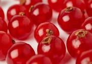 Red Currant over white surface background Stock Photos