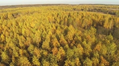 Aerial view of an autumn yellow forest with a bird's eye view Stock Footage