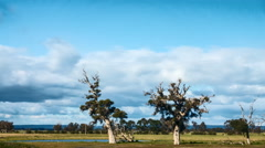 Time Lapse - Clouds movement behind trees somewhere in Australia Stock Footage