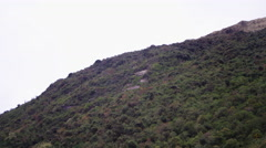 Ecuador Mountains with trees and rocks Stock Footage