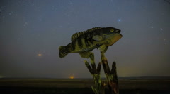 Night Sky Stars Over Giant Fish Art Roadside Attraction Stock Footage