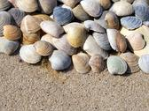 Background of seashells Stock Photos