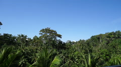 Tropical forest in Bali. Stock Footage