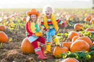 Kids picking pumpkins on Halloween pumpkin patch Stock Photos