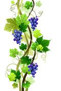 Vineyard Stock Illustration