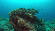 Coral reef with plenty fish. 4k Stock Footage