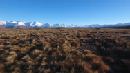 Moving view over alpine tussock in Canterbury, New Zealand Stock Footage