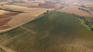 Aerial shot of Italian vineyard and a road between cypress plants. Stock Footage