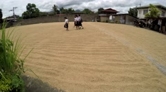 Uniformed girls student trampling on dried rice grains Stock Footage