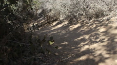 A young man and woman couple trail running. Stock Footage