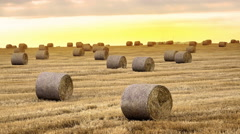 Majestic yellow field with round hay bales at twilight glowing by sunlight, 4 Stock Footage