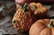 Different pumpkins Stock Photos