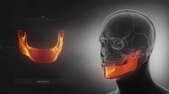 Black x-ray skull animation - mandible or mandibula Stock Footage