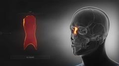 Black x-ray skull animation - NAsal bone - os nasale Stock Footage