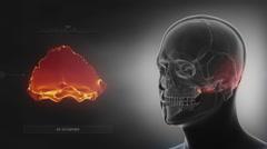Black x-ray skull animation - Occipital bone - os occipitale Stock Footage