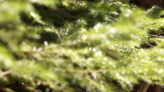 Rocks covered in moss by a river. Stock Footage