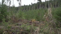 A mountain biker going off jumps in a forest on a mountain. Stock Footage