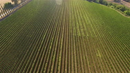 Aerial shot of vineyard rows in Tuscany, Italy. Stock Footage