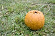 Big orange pumpkin on green grass Stock Photos