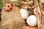 Pile of colored pumpkins and gourds Stock Photos