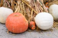Pile of orange and white colored pumpkins Stock Photos