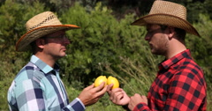 Bio Farm Worker Men Holding Lemons and Chatting About Exotic Fruits Plantation Stock Footage