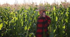 Agriculturist Man Talking On Mobile Phone About Cornfield and Farming Activity Stock Footage