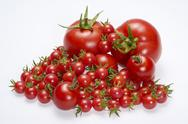 Lots of tomatoes Stock Photos