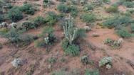 Orbiting aerial shot of a saguaro cactus in the desert Stock Footage