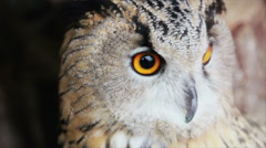 Owl close-up turns his head Stock Footage