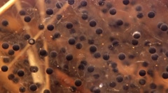 Close-up underwater shot of moor frog spawn Stock Footage