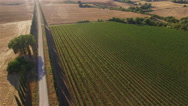 Aerial: camera pan towards vineyard. Tuscany, Italy. Stock Footage