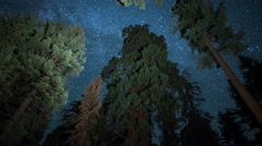 Sequoia Milky Way 05 Grant Grove Kings Canyon 4K Stock Footage