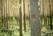 Forestry paint marking on tree trunks in woods Stock Photos
