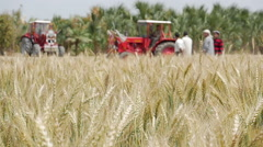 Egyptian farmer in the field Stock Footage