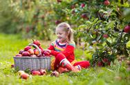 Little girl picking apple in fruit garden Stock Photos