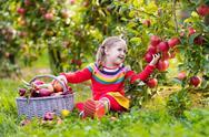 Little girl picking apple in fruit garden Stock Photos