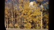 1967: journey through colorful deciduous forest on sunny day COLORADO Stock Footage