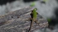 Green lizard crawls on the arm macro Stock Footage