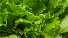 Close-up of salads leaf Stock Footage