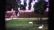 1964: fenced in fort with goats grazing in front yard JAMESTOWN, VIRGINIA Stock Footage