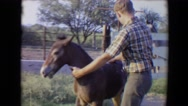 1967: teenager training young colt horse at the family farm TUCSON, ARIZONA Stock Footage
