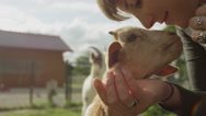 CLOSE UP: Cheerful girl petting adorable little kid goat looking for attention Stock Footage
