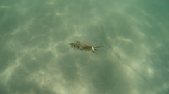 Sea crab down to the seabed Stock Footage