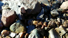 Small crab on the rocks Stock Footage